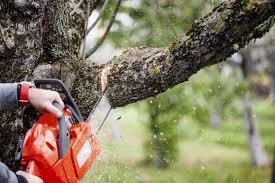 celtic tree services llc tree service darien ct fairfield