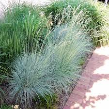 ornamental grasses finke gardens nursery