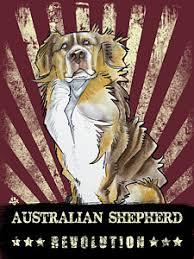 australian shepherd yoga video australian shepherd drawings fine art america
