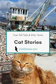 cat rage room cat stories blog