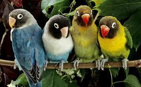 desktop hd wallpapers of birds and download