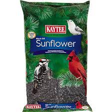 black oil sunflower wild bird seed premium bird food kaytee