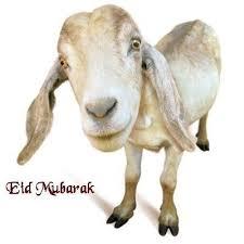 eid ramadan coloring