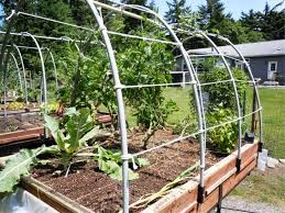 tomato trellis ideas decoration u0026 furniture