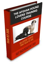 afghan hound good and bad dogs u003e u003e afghan hound free training course on afghan hounds