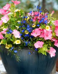 Nice Flower Picture - best 25 flower garden pictures ideas on pinterest flower garden