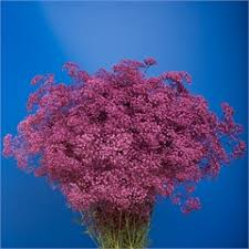 Baby S Breath Wholesale Gypsophila Dyed Purple Wholesale Flowers Uk Wedding Flowers