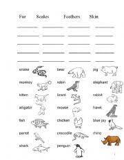 english worksheet animals body covering ayen pinterest