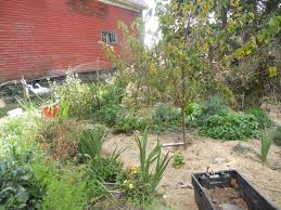 file permaculture garden with a fruit tree herbs flowers and