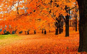 vibrant wallpaper vibrant orange autumn widescreen wallpaper wide wallpapers net