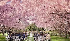 cherry blossom wedding sarnia park cherry blossom wedding photos stan echo
