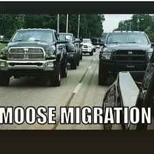 Lifted Truck Meme - images about liftedtruckmemes tag on instagram