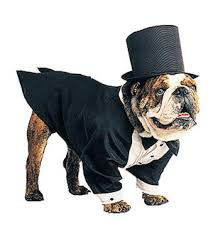 Outrageous Halloween Costumes Outrageous Halloween Costumes Pets Tuxedo Halloween