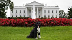 House Dogs by Presidential Pets