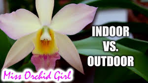 indoor orchids vs outdoor orchids youtube