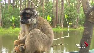 mission madagascar iii calgary researcher fights save