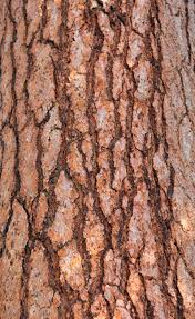 large wooden pieces wood texture tree bark large wood pieces wooden stock photo