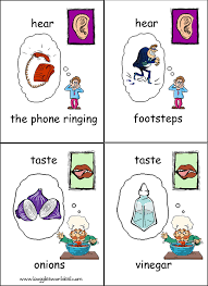 73 free resources u0026 activities for teaching the 5 senses