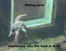 Starfish Meme - sad starfish meme album on imgur