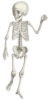 picture of a halloween skeleton skeleton for kids clip art library