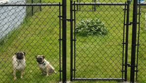 Backyard Fence Ideas Pictures Fence Olympus Digital Camera Best Dog Fence Options Interesting