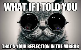 Mirror Meme - what if i told you that s your reflection in the mirror cat