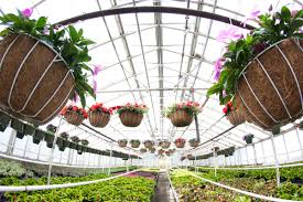 Home Design Center Neptune Nj by Variety Growers Neptune Nj 07753 Garden Centers In Nj Flower Shops In Nj Flower Distributors Nj Flower Shop Nj Green Houses Jpg