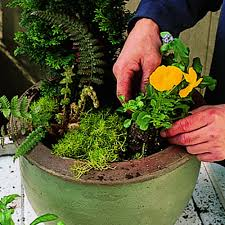 Backyard Plant Ideas Cool Container Gardens Sunset