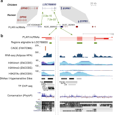 a subset of conserved mammalian long non coding rnas are fossils