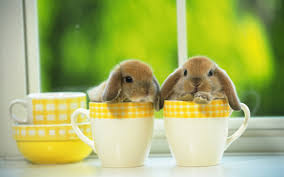 baby rabbits for sale wallpaper