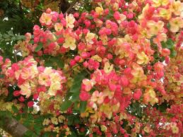 seeds showers and trees on pinterest rainbow shower i have one