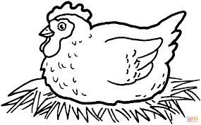 drawn egg hens pencil and in color drawn egg hens