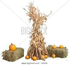 Fall Hay Decorations - powerpictures crystalgraphics com photo corn stalk