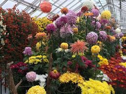 Smith Botanical Garden by Chrysanthemum Show Returning To Smith College In Northampton