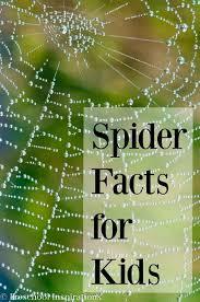 20 spider facts for preschoolers preschool inspirations