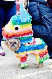Dog Halloween Costumes 25 Dog Halloween Ideas Dog Halloween