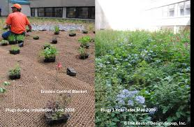 minnesota native plant society green roofs combined minnesota stormwater manual
