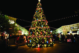 best place to buy christmas tree christmas tree cut out