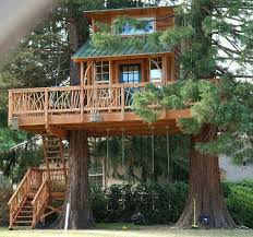 Cool Tree Houses 19 Best Tree Houses Images On Pinterest Architecture Awesome