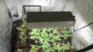 chambre de culture cannabis complete nazaire deux chambres de culture de cannabis découvertes