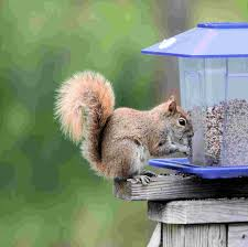 Scare Birds Away From Patio by How To Keep Squirrels Away From Bird Feeders Install It Direct