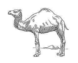 file dromedary psf png wikimedia commons