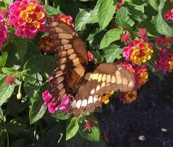 native plants for butterfly gardening benton soil u0026 water img 3774 jpg