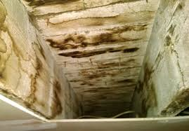 mold in basement simple mold in basement with mold in basement