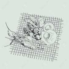 vector seafood illustrations set hand drawn grill sea food sketch