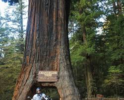 Chandelier Tree Address Redwood National Park Go Forth Explorer
