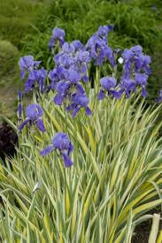 10 Perennials That Thrive In by Plants That Thrive In Clay Soil Hgtv