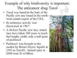 protection of biodiversity and ecosystems ppt download