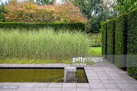 formal pond with ornamental grass border and yew hedge mien ruys