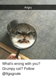 Angry Meme Cat - angry what s wrong with you grumpy cat follow meme on me me